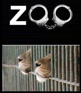 Zoo 09 Message - Zoo handcuffs