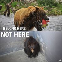 Zoo 12 Message - Zoos Bear in zoo