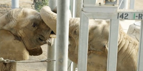 Zoo 13 Message - Zoos Elephants and the first time an ex-circus elephant saw another in 36 years