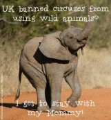 Zoo 15 Message - Zoos UK bans use of wild animals in circuses