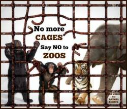 Zoo 17 Message - Zoos no more cages