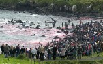 20 Oceans and rivers - Dolphin slaughter in Denmark and Japan 06