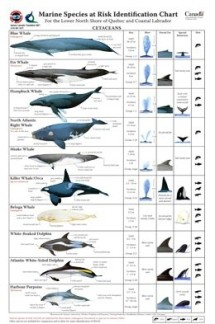 37 Oceans and rivers - ID chart