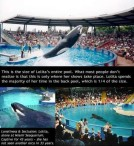 41 Oceans and rivers - Killer whales and Seaworld 04