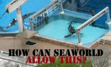 63 Oceans and rivers - Seaworld how can they allow this