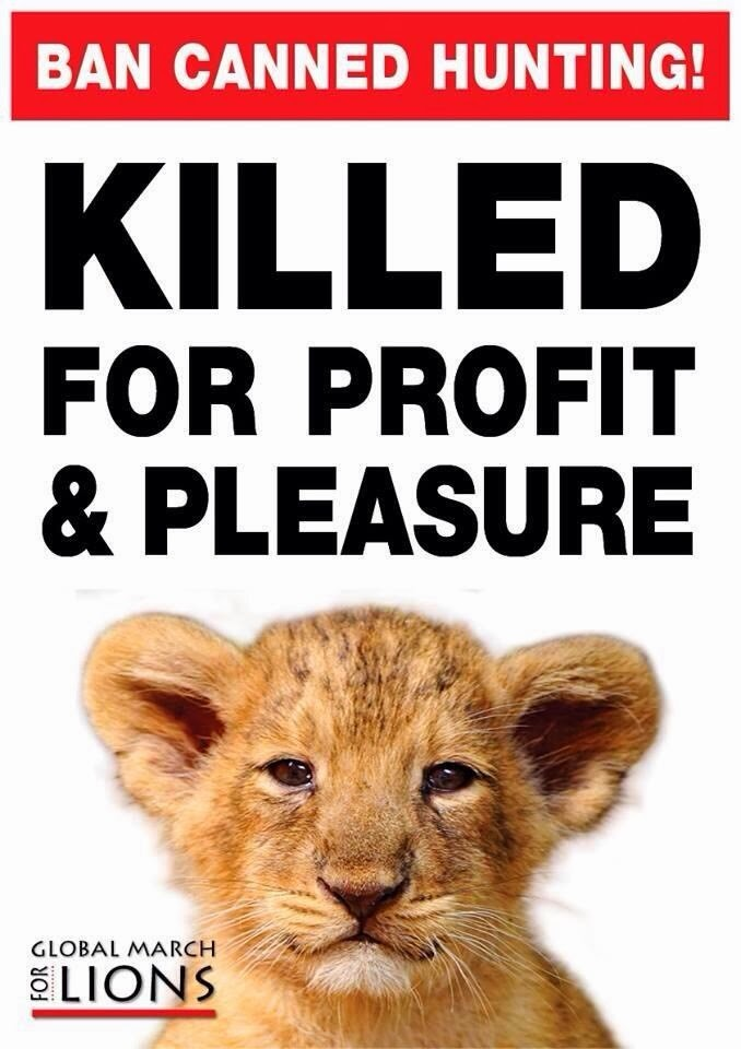 lions poster for canned hunting 09 end trophy hunting now