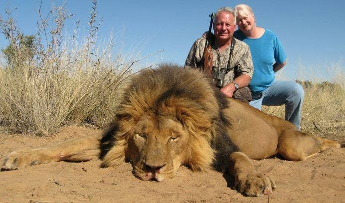 lions trophy hunted 40 end trophy hunting now