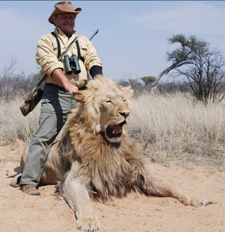 lions trophy hunted 41 end trophy hunting now