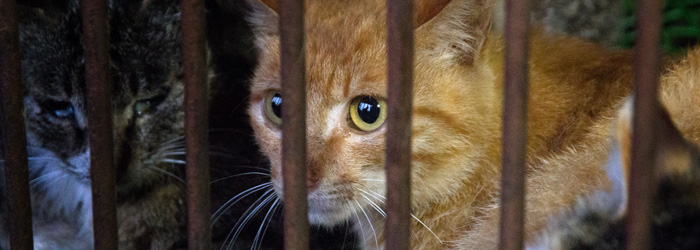 Dog and Cat Meat and Fur Trade | END Trophy Hunting NOW