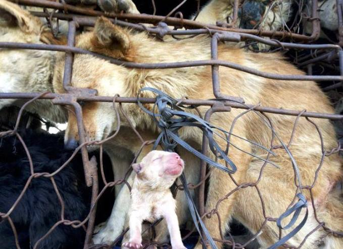 Dog meat trade 01
